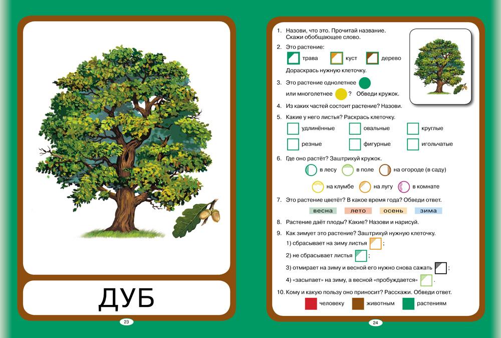 Фотографии растение для дошкольника   ovoshi2017.ru: http://ovoshi2017.ru/rastenie-dlya-doshkolnika