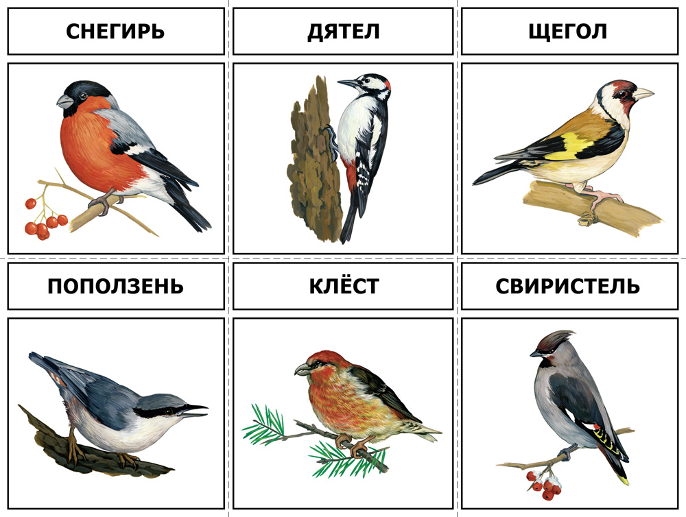 Дикие птицы жарких и холодных стран.  Перелетные и зимующие птицы России.